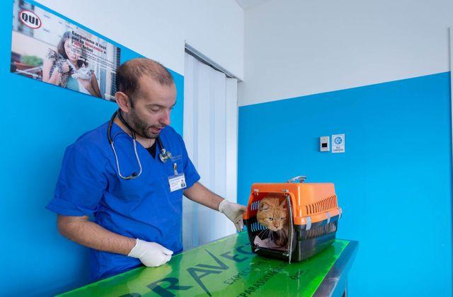 Studio+Veterinario-Dr.+P.F.+Garatti-Pian+Camuno-048-640w